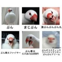 怒りの6段活用「激おこぷんぷん丸」のバリエーション、文鳥と柴犬