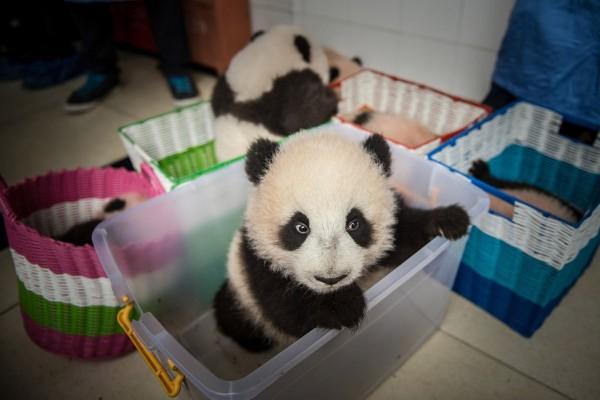 Pandas01