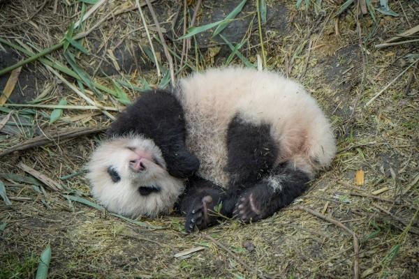 Pandas06