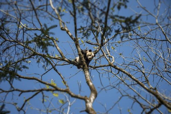 Pandas11