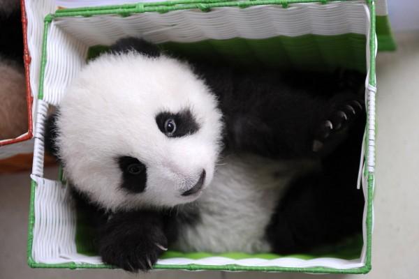 Pandas13