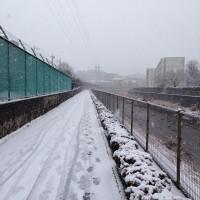 30日、町田駅前近くの境川から上流方面を見た