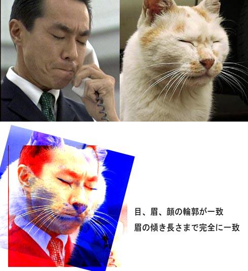 柳葉敏郎とネコ