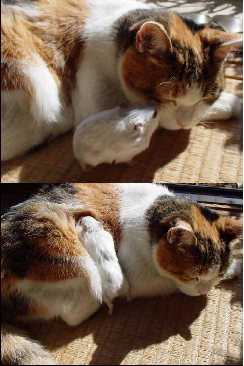 「ねえモフモフしていい?モフモフしていい�... on Twitpic