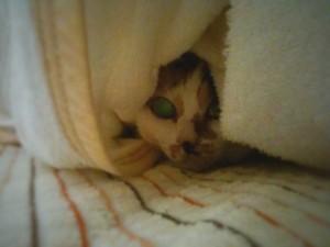 布団の中で寝ていたマイ