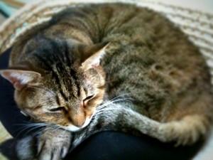 猫ベッドで寝ていた野々