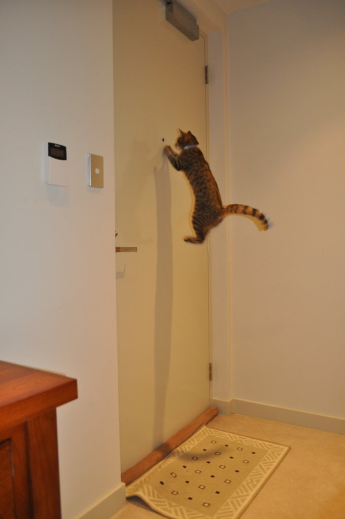 Who's there hover cat?