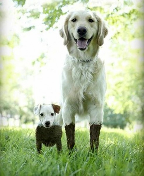 these 2 dogs were playing in the mud. they had slightly different experiences. - Imgur